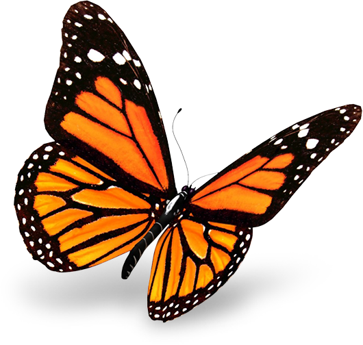Mariposa Comercial LML